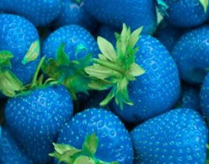 Sonarome Natural Liquid Food Color : BRILLIANT BLUE 17206 N
