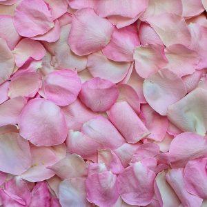 CEC Rose Petal Flavour 2215-02