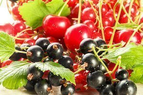 red berries or red fruit
